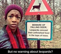 Beware of falling deer: Leopards conceal their unfinished food in the tops of trees. - But no warning about the leopards?