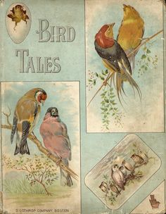 Bird Tales, 1872 dedication More Vintage Book Covers, Vintage Children's Books, Old Books, Vintage Ephemera, Antique Books, Vintage Art, Illustration Art Nouveau, Book Illustration, Vintage Birds