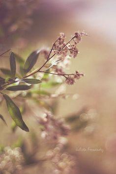 Красивые картинки. Заработок в интернете. #Красивые #картинки #Цветы #Природа #Обои #Весна #Заработок #в #интернете