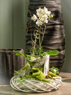 Ach, ich mach mal einen auf Frühling :-)  #Orchidee #Pflanzung #Rebenring #Floristik  EBK-Blumenmönche Blumenhaus – Google+