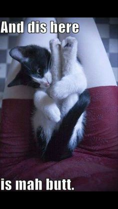 The latest cat pictures, cat rescues, cat breeds, cat news, cute kittens and kitty cats. Funny Animals With Captions, Cute Animal Memes, Funny Animal Quotes, Animal Jokes, Funny Animal Pictures, Cute Funny Animals, Cute Baby Animals, Funny Cute, Cute Cats