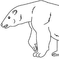 Coloring polar bear