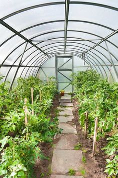 crop shelter for getting both early and late harvests - on this page: Practical Greenhouse Gardening Tips From An Experienced Nurseryman Backyard Greenhouse, Fresh Flowers, Old World, Gardening Tips, Flora, Environment, Landscape, Cool Stuff, Plants