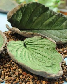 """Decorative cement leaves make a unique statement in this craft by Jim """"Figgy"""" Noonan of """"The Martha Stewart Show."""""""