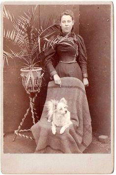 Victorian Cabinet Card Pomeranian Spitz Dog Lge Palm Plant c1890s