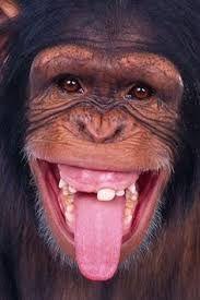 Resultado de imagen para gorilas changos pinterest