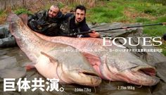 Monster Catfishing with EQUES in ITALY