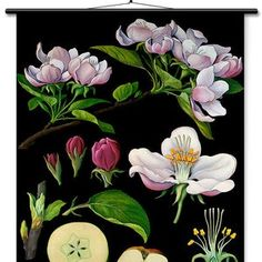 Educational Wall Chart Dog Rose Botanical Print Poster by | Etsy Teaching Aids, Dark Backgrounds, Print Poster, Botanical Prints, Own Home, Germany, Chart, Fine Art, Education