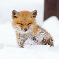 Little baby fox in the snow, so cute!