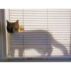 #caturday. Every apartment I rented has its blinds remade by my cats. If you own a cat, you know what I'm talking bout.