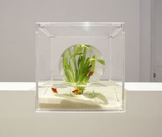 Upside-Down Fish Tank by Haruka Misawa | The Dancing Rest https://thedancingrest.com/2016/05/04/upside-down-fish-tank-by-haruka-misawa/