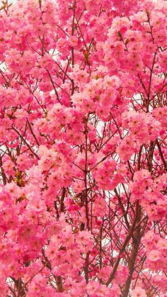 New wall paper iphone spring nature pink flowers Ideas Flor Iphone Wallpaper, Flower Wallpaper, Beautiful Nature Wallpaper, Beautiful Flowers, Cute Pink Background, Pretty Backgrounds, Iphone Backgrounds, Phone Wallpapers, Spring Wallpaper