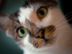Changi cat