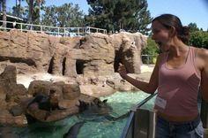 Me messing around Sea World San Diego while doing work with the pilot whales. Pilot Whale, Sea World, Whales, Mount Rushmore, San Diego, Mountains, Nature, Travel, Baleen Whales