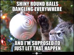 Why all cats hate Christmas - shiny round balls dangling everywhere & I'm supposed to let that happen
