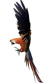 MACAW - Would totally get this as a tattoo
