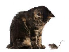 Muursticker Kat en muisje
