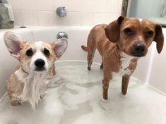 Bath time two unhappy puppies #cute #dogs #dog #aww #puppy #adorable