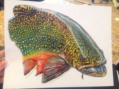 MINI Colored Pencil Brook Trout Print by Passionfortrout on Etsy