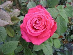 Rose (lolita lempicka) par Jean-pierre MARRO sur L'Internaute