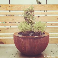 The You Metal Planter's sleek design will complement any modern patio outdoor or indoor landscape! Corten Steel Planters, Metal Planters, Planter Pots, Aluminum Uses, Weathering Steel, Wood Burning Fire Pit, Modern Patio, Small Trees, Architectural Elements