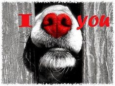 I ♥ you too  #valentinesDay2014 CanineStyles.com