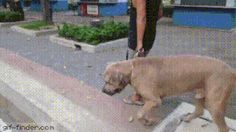 Dog thinks he found a snack, mother instincts kick in.