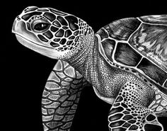 Pencil Drawing Tutorials Sea Turtle Ink Drawing - Printed on Kodak Professional Matt paper, this is a high quality digital print of an original pen Ink Drawings, Animal Drawings, Art Scratchboard, Kratz Kunst, Sea Turtle Art, Sea Turtles, Sea Turtle Drawings, Ocean Turtle, Black Paper Drawing