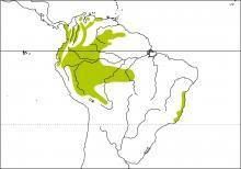 Distribution range map for Orange bellied euophonia