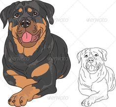 Buy Rottweiler Dog by HarleyDesign on GraphicRiver. Rottweiler Dog vector is a hand drawn EPS file. It is easily editable. JPG file is included All layers a. Rottweiler Facts, Rottweiler Training, Rottweiler Love, Rottweiler Puppies, Beagle, German Dog Breeds, Purebred Dogs, Rottweilers, Dog Vector