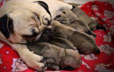 Snuggling her pugglings