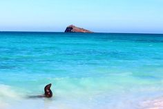 Paradise in the Galapagos Islands #wanderlust