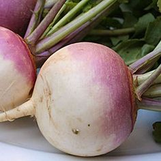 If you have root crops still in the ground from last year, harvest before new green top growth appears. More info about harvesting and storing root vegetables - http://davesgarden.com/guides/articles/view/3520