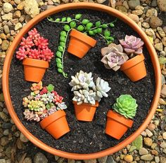 55 creative DIY succulents ideas for you Page 44 of 55 Succulents plants DIY potted plants succulents idea. The post 55 creative DIY succulents ideas for you Page 44 of 55 appeared first on Garden Diy. Succulent Arrangements, Cacti And Succulents, Planting Succulents, Planting Flowers, Potted Plants, Garden Plants, Potted Flowers, Garden Beds, Succulent Gardening