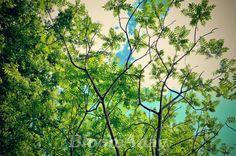 ciel d'été/ summer sky tree blue and green