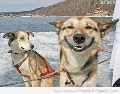 Smiling animals (18)