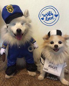 WEBSTA @ the.fluffy.duo - Zen is guilty of stealing my ❤️(Zen es culpable de robar mi corazón.)#ablinddogandhisbestfriend •••••••••••••••••••••••••••••••••••••••••••#igdogs #photographer #model #fluffy #pom #pomeranian #pomlife #rescue #dog #pups #blinddog #eskie #fluff #americaneskimo #eskie_spitz #instacool #instacute #cute #friends #ilovemydog #pawheart #viralpets #petchannel #barkhappy #halloween #tntpetmoment