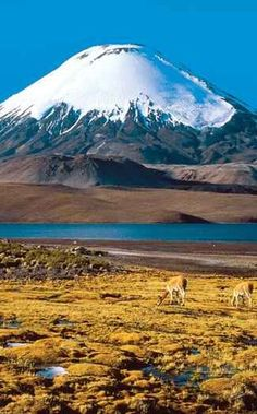 Atacama desert, Chile - I tried to make this happen when we lived in Brazil...but I have not given up yet