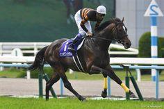 Kitasan Black Cavallo da corsadi razza purosangue inglese, campione in Giappone nato il 10 marzo 2012. Generato daBlack Tide eSugar Heart. Di proprietà