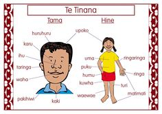 Teaching and learning is made easy with this easy-to-read poster with body labels in Maori School Resources, Teaching Resources, Maori Songs, Maori Symbols, Teaching Babies, Student Behavior, Learning Time, Kids Songs, Classroom Themes