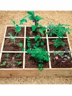 1000 images about square metre garden on pinterest gardening squares and square foot gardening - Square meter vegetable garden ...