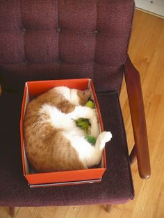 Keep cat hair off the furniture by putting a shoe box on it!