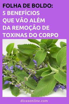Folha de Boldo - Benefícios e Contraindicações Medicinal Plants, Ayurveda, Plant Leaves, Herbs, Vegan, Health, Fitness, Macrame, Quit Drinking