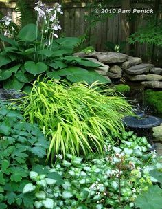 Waterfall plantings. Too bad mine is in the sun I would love to plant shade plants around it