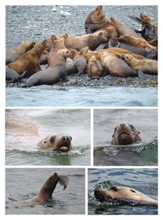 """The Sea Lions in Turn Ignored Their Upstairs Neighbor & Concentrated Either on Evicting Their Siblings From the Sofa, or Playing With Their Food"" by maggie-johnston ❤ liked on Polyvore featuring art"