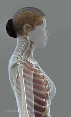 Anatomy 3D render