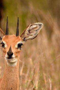 Submission by Frans Van Heerden. Discover more free photos from Frans: https://www.pexels.com/u/frans-van-heerden-201846/ #nature #field #animal