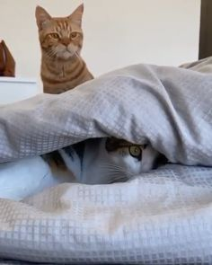 Cute Animal Videos, Funny Animal Pictures, Cute Funny Animals, Cute Baby Animals, Animals And Pets, Funny Cats, Beautiful Cats, Animals Beautiful, Image Chat