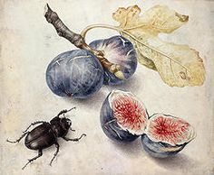 Giovanna Garzoni  Figs with a Beetle  gouache on vellum  Private collection