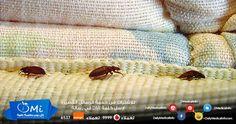 حشرة الفراش .. لا تراها بالعين المجردة ولكن لها أضرار عديدة http://www.dailymedicalinfo.com/?p=3563